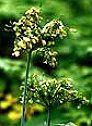 Una planta exclusivamente para la mujer