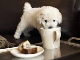 Cómo cuidar a los perros pequeños