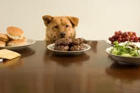 Cómo evitar que tu perro robe comida