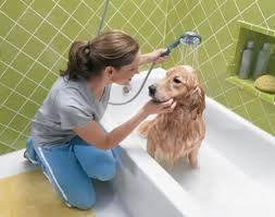 Cómo bañar a tu perro correctamente
