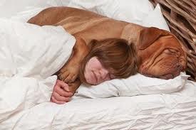 ¿Es peligroso dormir con tu mascota?