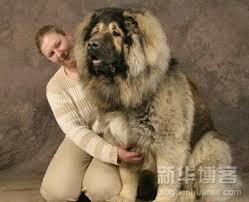 Cómo cuidar a los perros de gran tamaño