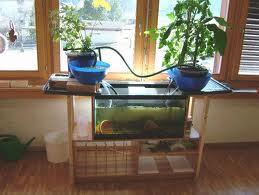 Cómo cultivar plantas y peces al mismo tiempo con la acuaponica