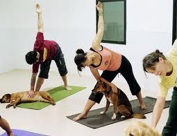 Doga, el yoga para perros