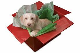 Mascotas de regalo