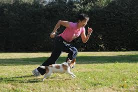Ejercicios físicos para perros de cualquier edad