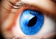 Remedios naturales contra las moscas volantes en los ojos