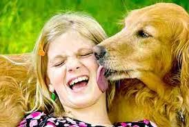 ¿Por qué los perros lamen la cara?