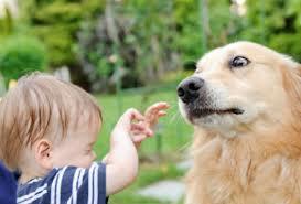 Niños que temen a los perros