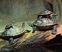 Las Tortugas: ¿de donde vienen y donde tienen que ir?