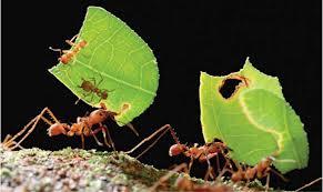 Como eliminar a las hormigas