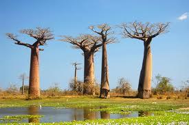 Madagascar, un destino de película