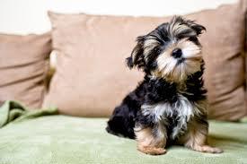 Mascotas ideales para tener en un piso