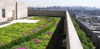 Cómo elegir las plantas para una terraza verde