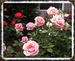Las 5 flores con mejor aroma