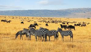 Safaris en Kenia: los cinco grandes te esperan