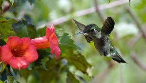 Cómo atraer colibríes a tu jardín