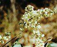 Las alergias y la homeopatía