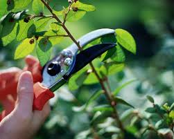 Como podar una planta