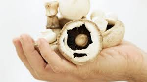 Dieta saludable para bajar de peso con champiñones