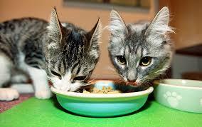 ¿Cómo realizar un dispensador de pienso para gatos?