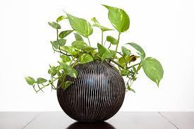 La importancia de las plantas para el Feng Shui
