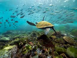 10 imperdibles de Ecuador