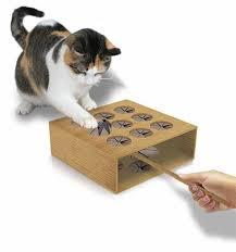 ¿Cómo entretener a tu gato?