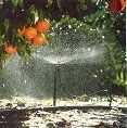 El exceso de agua en su jardín