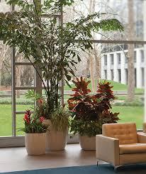 10 plantas para tu casa