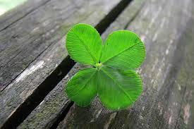 13 plantas de la suerte