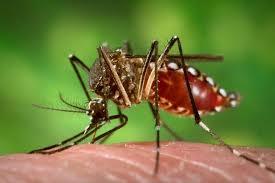 Zika: prevención y tratamiento