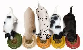 Mitos sobre la alimentación canina