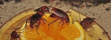 7 soluciones para terminar con las cucarachas