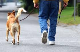 ¿Cómo enseñar a pasear?