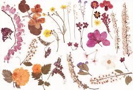 Jabones con flores prensadas