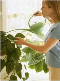 ¿Cómo regar una planta de interior?