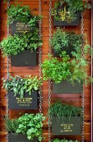 4 hierbas aromáticas