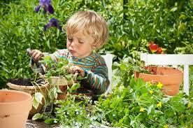Plantas ideales para niños