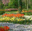 Mantenga su jardín en buen estado.