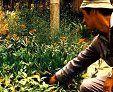 Recetas inofensivas con hierbas medicinales