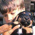 Nuestros niños y las mascotas