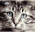 Los gatos y su reproducción