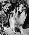 Lassie, nuestro mejor amigo de la TV