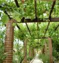 Un viñedo en tu jardín