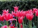 La magia de los bulbos en tu jardín