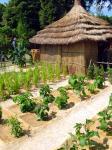 Cultiva tu jardín desde las semillas