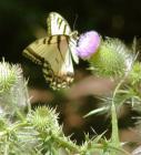 Consejos para hacer tu propio jardín de mariposas