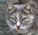 ¿Para qué les sirven los bigotes a los gatos?