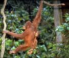 De viaje por Sumatra